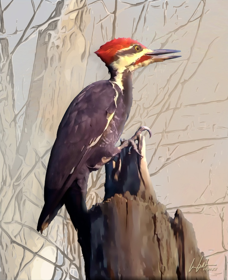 The Pileated Woodpecker Morning, eLITHOGRAPH, by les booth